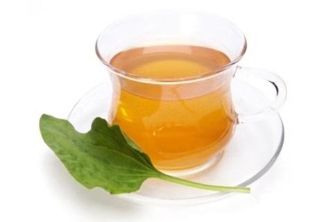 Невероятные свойства чая из подорожника