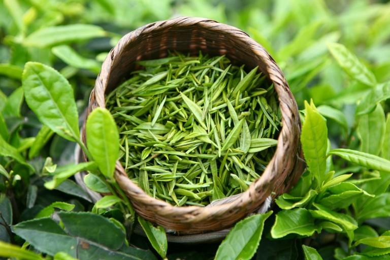 Крепкий зеленый чай увеличивает грудь