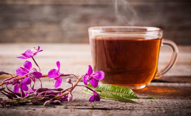 Иван-чай может прославить Костромскую область