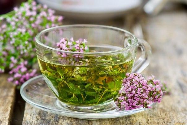 Целебные свойства трав: как подобрать правильный чай для здоровья?