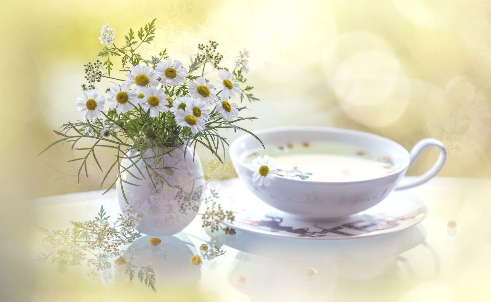 Как часто можно пить ромашковый чай