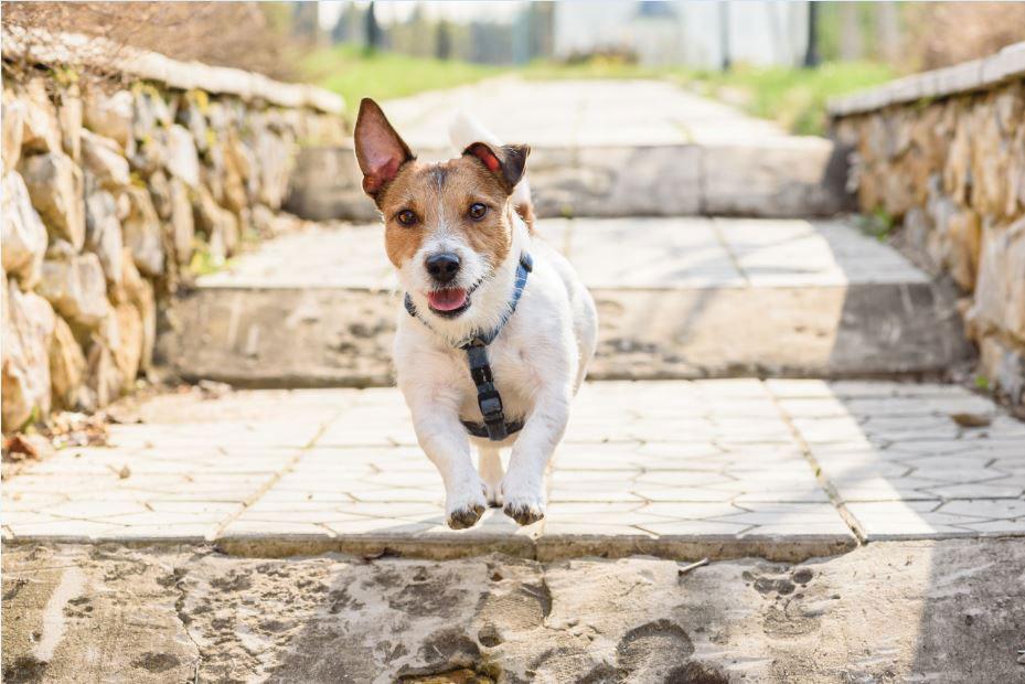 Как помочь собаке привыкнуть к новому месту?