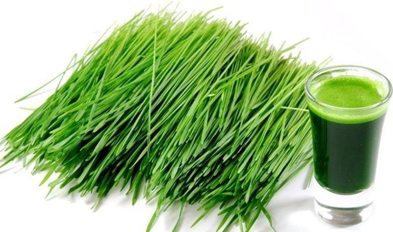 Польза зеленого ячменя для здоровья