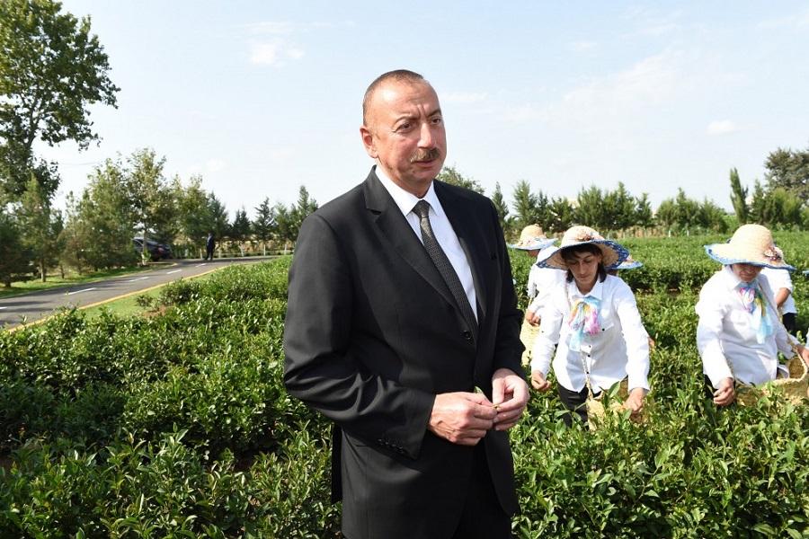 Президент Ильхам Алиев ознакомился с чайной плантацией в Лянкяране