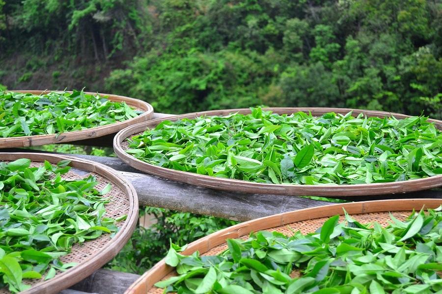 Адыгейский чай получил золотую медаль агропромышленной выставки «Золотая осень»