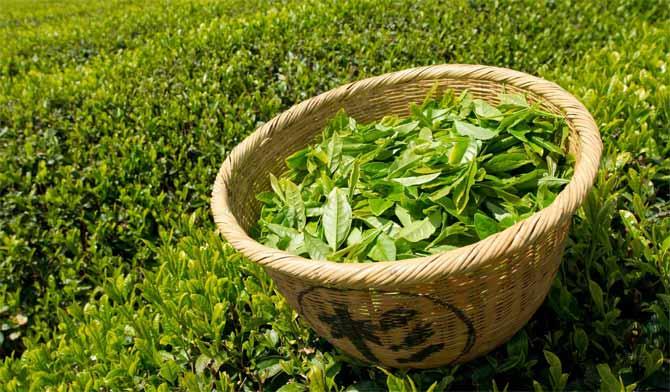 Как использовать зеленый чай в уходе за кожей