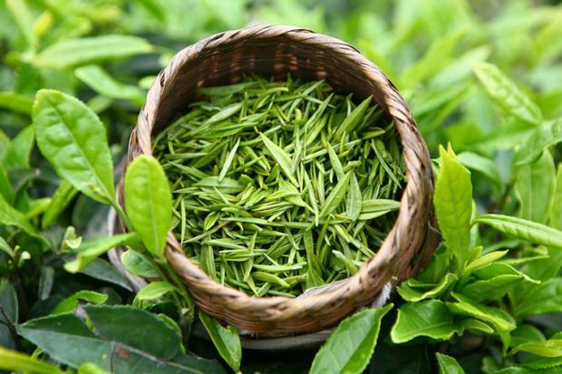 Открытие: зеленый чай полезен для мужчин
