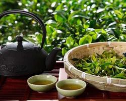 Как выбрать настоящий китайский чай