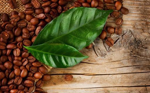 «Чай из кофе» полезнее обычного чая или кофе