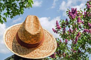 Шляпа и зеленый чай. Как избежать теплового и солнечного удара?