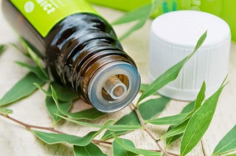 Названы полезные свойства масла чайного дерева