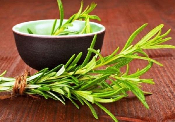Чай из розмарина и его полезные свойства