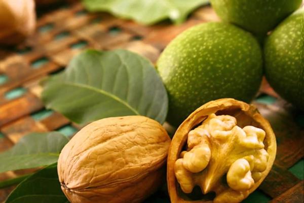 Целебные свойства чая из грецкого ореха