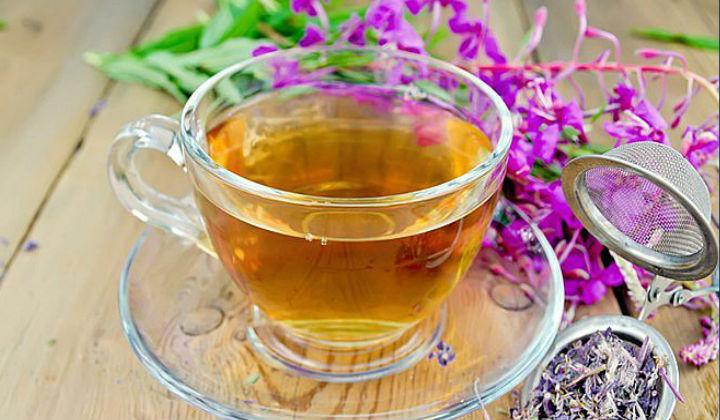 Иван-чай с рябиной: уникальный русский фиточай из-под Петербурга