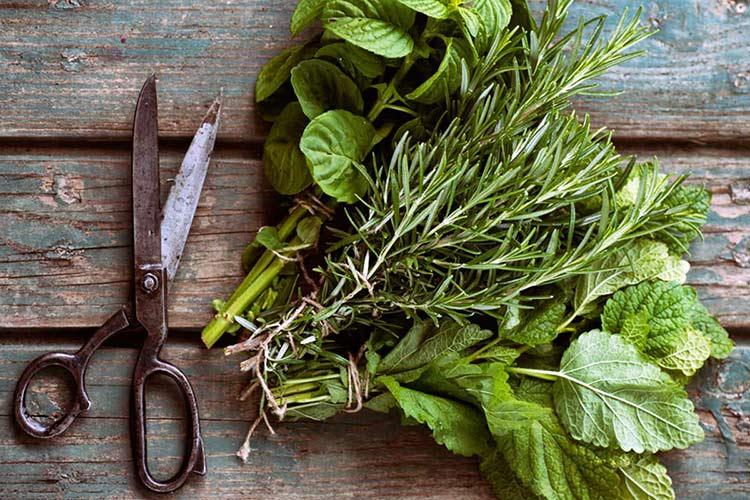 Сбор и хранение лекарственных трав