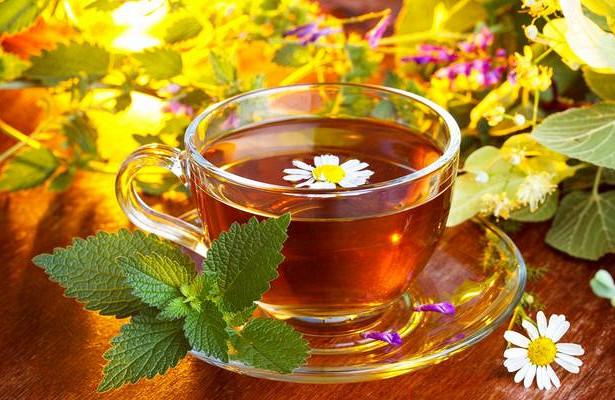 Вкусный чай из травы Джинура Прокумбес , которая уменьшает сахар в крови
