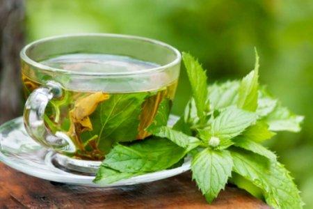 Зелёный чай станет эффективным лекарством от рака
