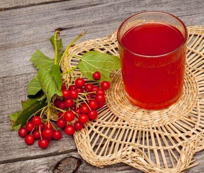 Рецепты чая с калиной, чтобы получить максимум полезных свойств