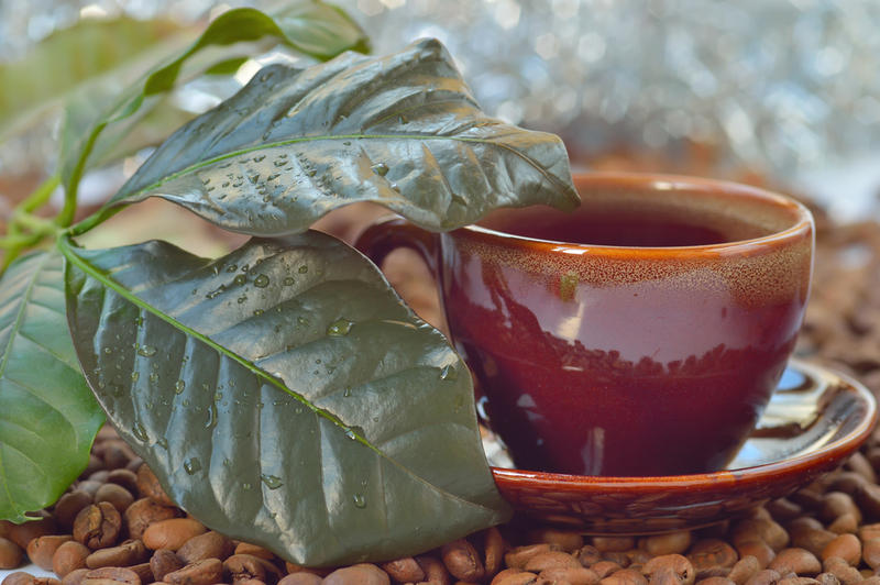 Ароматный чай из кофейных листьев