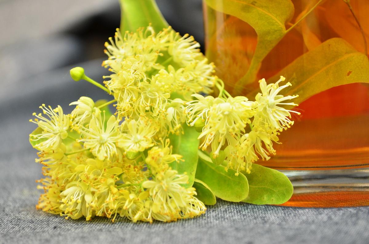 Липовый чай — полезные свойства для лица и тела