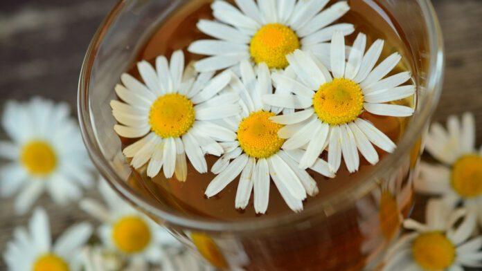 Этот чай полезен для людей с диабетом второго типа
