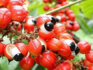Эксперт рассказал о ягодах Годжи, чайном грибе и гуаране — чуда не произойдет
