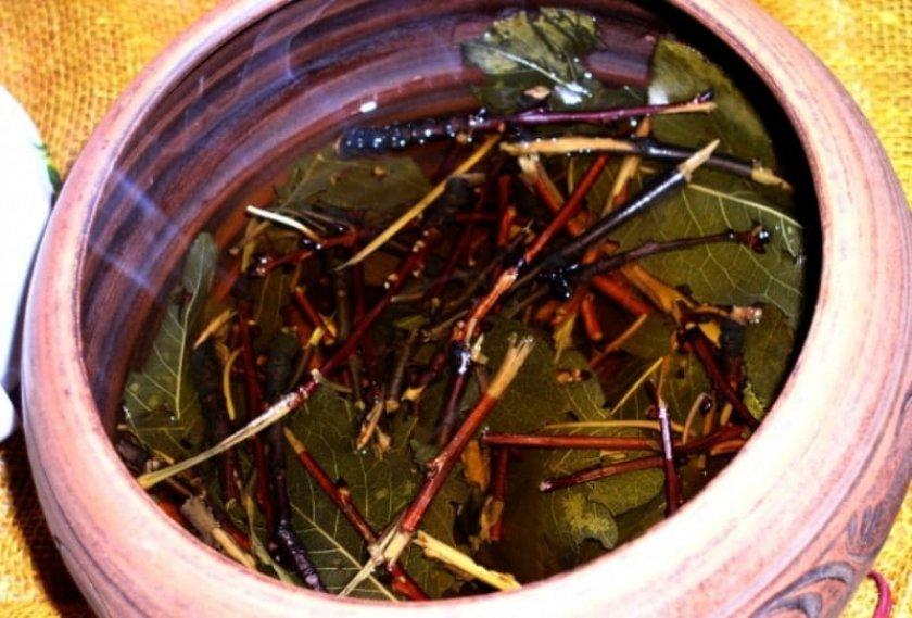 Весенний чай из веточек: готовим омолаживающий, целебный напиток