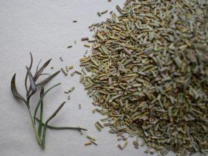 Травяной чай из розмарина