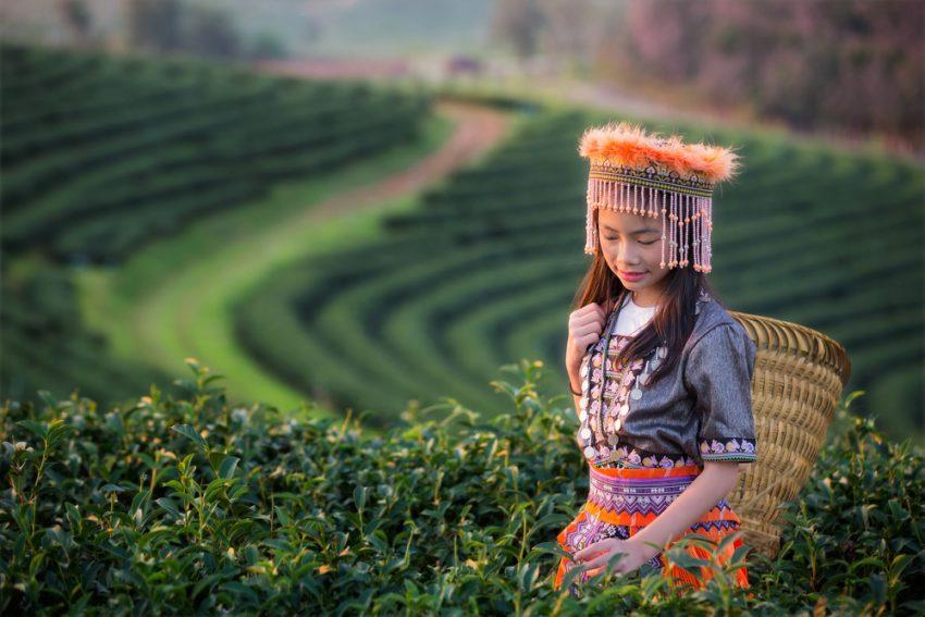 Происхождение чая. Окутанный легендами