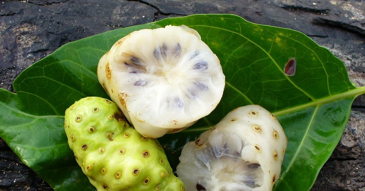 Как заваривать чай Нони – напиток из тропического фрукта