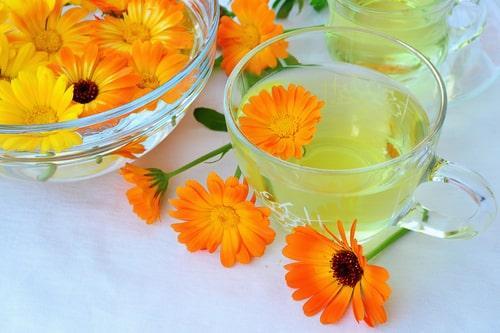 Польза чая с календулой и рецепты приготовления