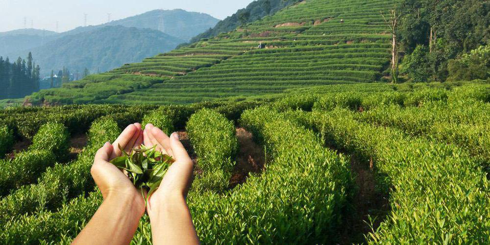 Основные производители чая