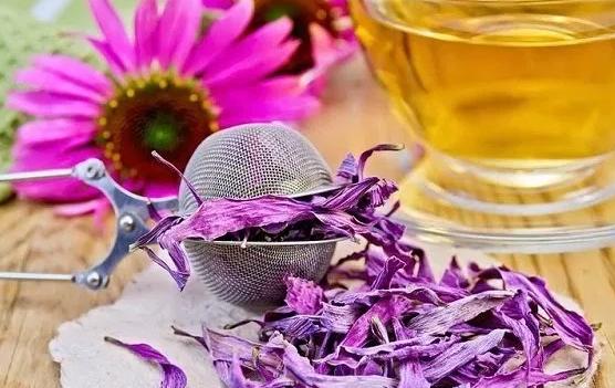 Травяной чай из эхинацеи