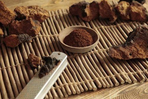 Чага – берёзовый гриб на страже здоровья