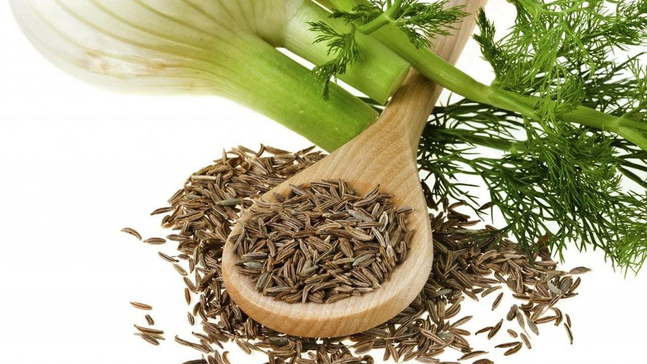 15 лечебных свойств чая из фенхеля и его противопоказания