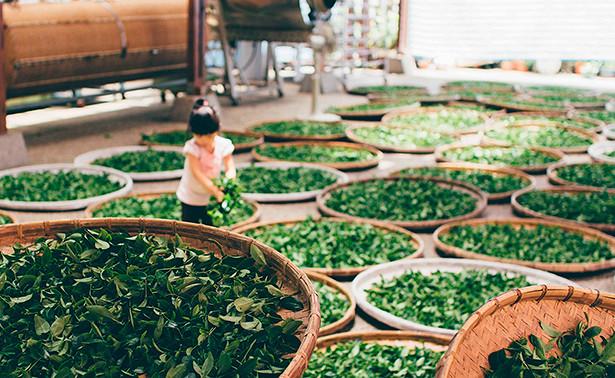 Названы виды чая, способные защитить от рака