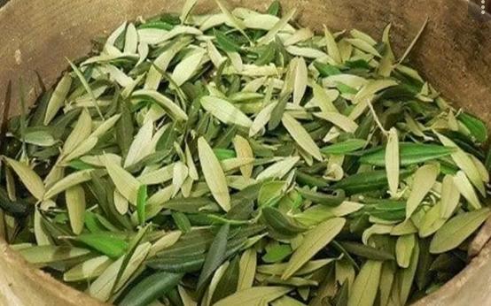 Чудодейственный эликсир из Библии: рецепт самого полезного в мире чая