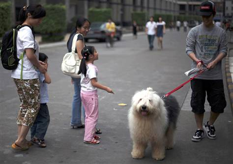 china one dog policy